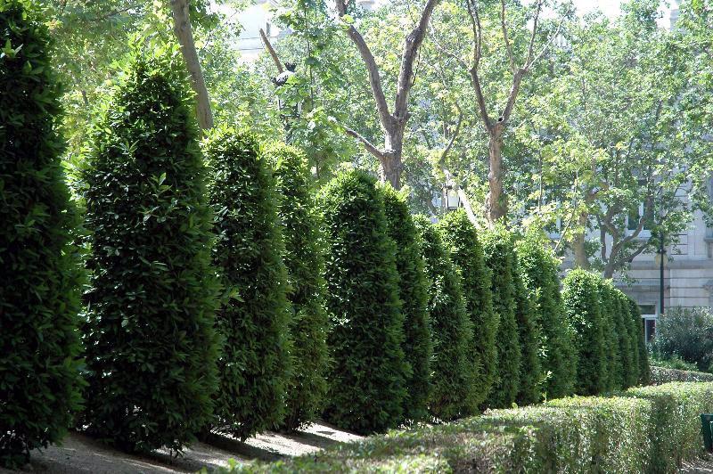 Con feras ideales para terrazas for Coniferas de jardin