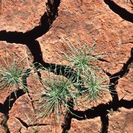 Tierra agrietada sequia recurso falta precipitaciones medioambiente