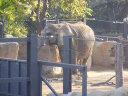 Susi al zoo