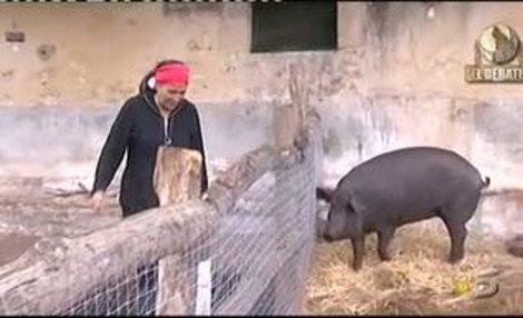 El Cerdo De Acorralados
