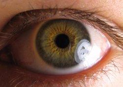 Hallan una fuente de células madre neuronales en el ojo