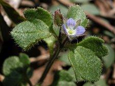 Las malas hierbas son más resistentes al cambio climático Fotonoticia_20120118162451_225