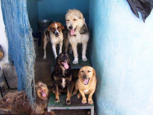 Las adopciones en la protectora de m laga descienden un 15 for Protectora de animales malaga ciudad jardin