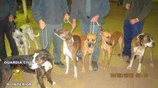 Perros De Caza Intervenidos En Almonte.