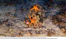 Imagen De Oceana De Las Montañas Submarinas De Baleares.