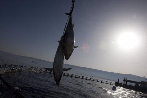 Recurso de atún