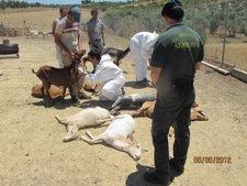 Animales Encontrados Por El Seprona.
