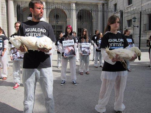 Protesta contra producción de foie
