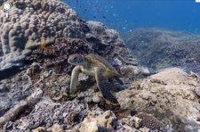 La Gran Barrera de Coral en Street View