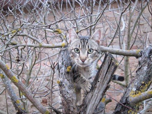 Gato, Gatos, Mascota, Felino, Animal De Compañía