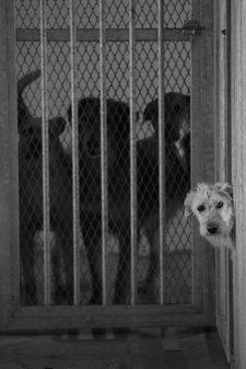 Perros Abandonados A La Espera De Adopción