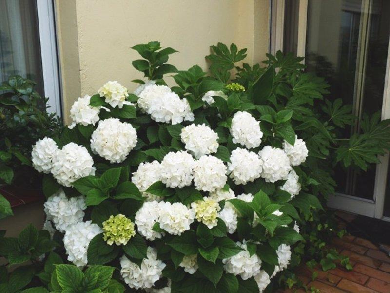 Relaga cursos de jardiner a a domicilio con arcadia for Jardineria a domicilio barcelona