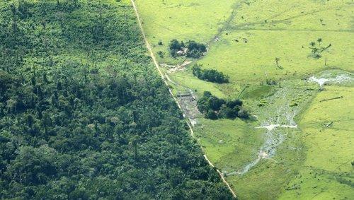 Deforestación En El Amazonas, En Brasil