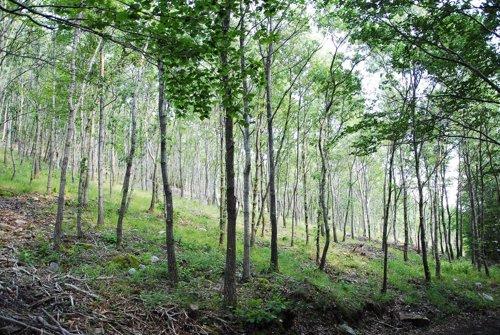 Bosque de roble melojo