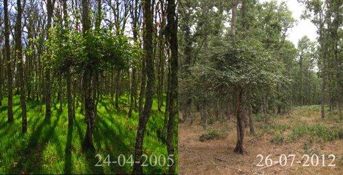 Zona de la genestosa en la actualidad y en 2005 según Ecologistas en Acción