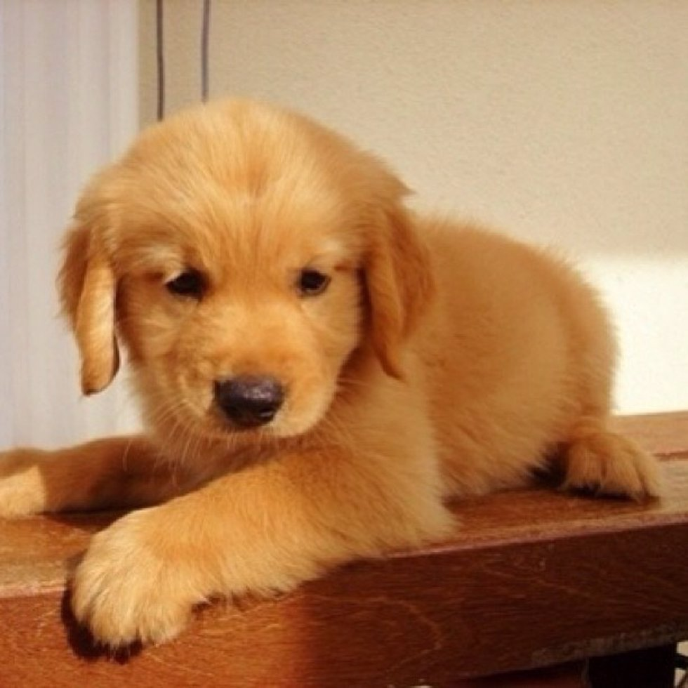 Lola y pluto los nombres de perro preferidos por los - Nombres clasicos espanoles ...