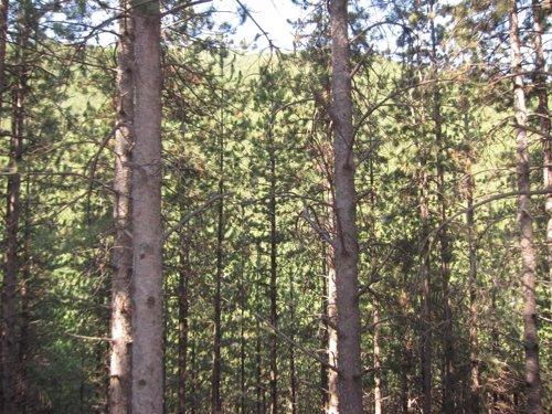 Árboles, Bosque