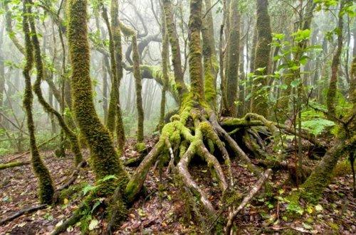 Ingenieros forestales proponen apostar por la biomasa y aumentar la inversión en bosques, que son