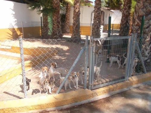 Residencia canina Paraíso en la provincia de Málaga