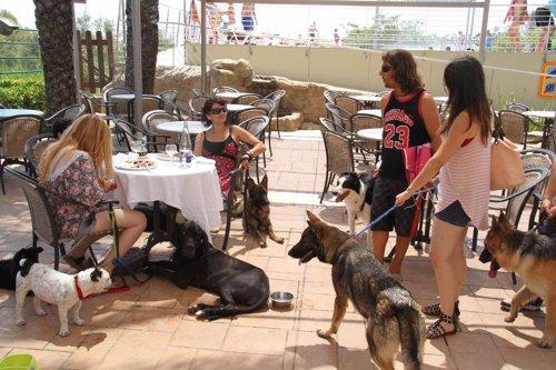 Cámping Castell Mar abre el primer restaurante con menú para perros