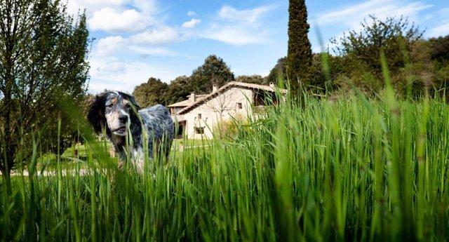 Casa rural El bosc del Quer (Barcelona)