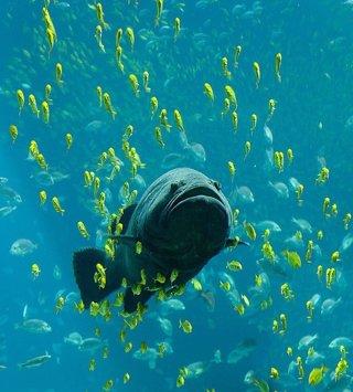 Pez, mar, océano, marino, submarino