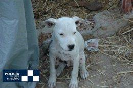 Cachorro abandonado en la Cañada Real
