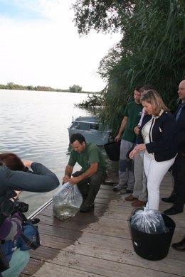 La consejera de Medio Ambiente, María Jesús Serrano, en la suelta de anguilas