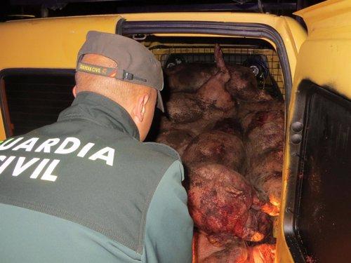 Algunos cerdos sacrificados encontrados en el vehículo de los detenidos