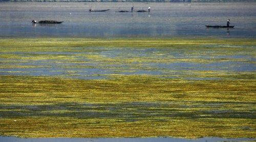 Cultivo De Algas Marinas