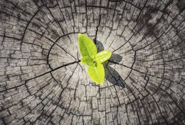 Qué es la resiliencia. 12 consejos sencillos para el día a día