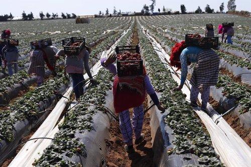Colombia, granjeros
