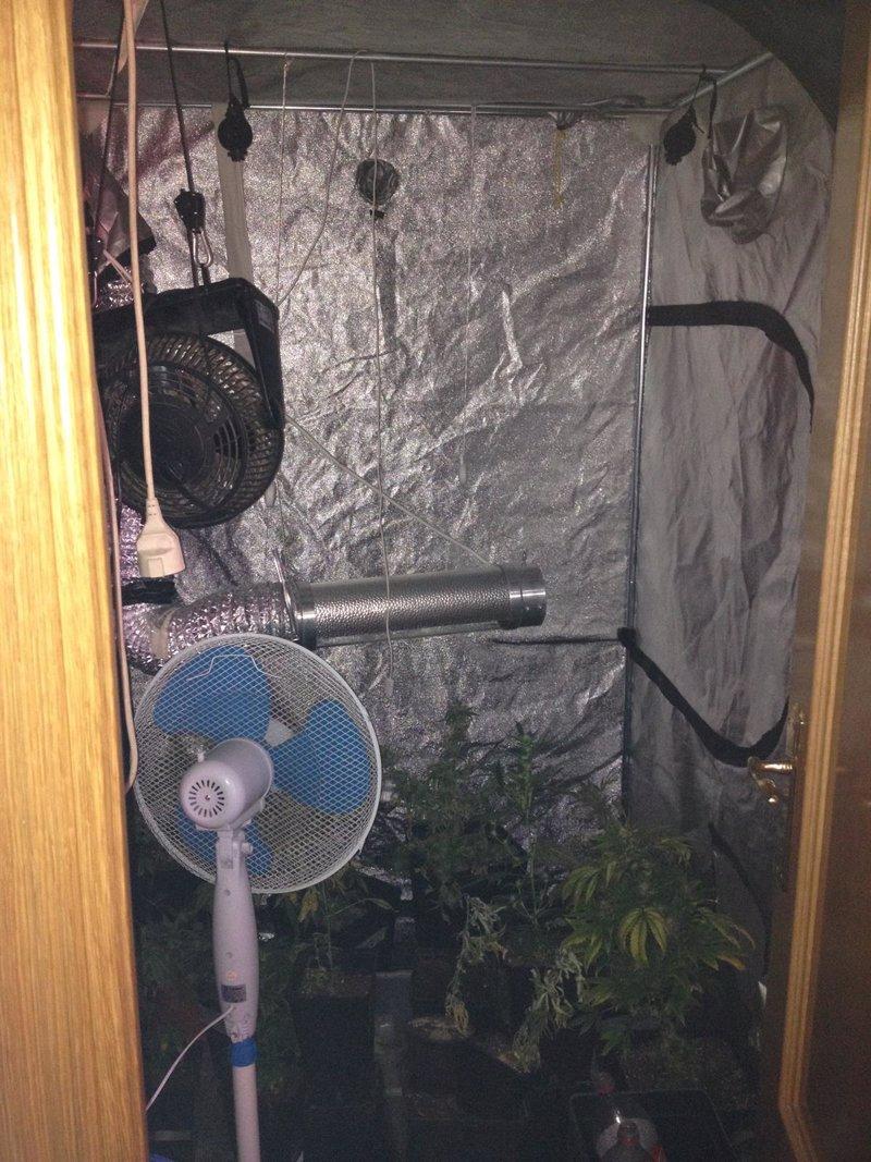 Invernadero Casero Marihuana Invernadero Para Marihuana en