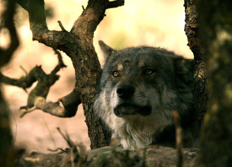 especie local peligro extincion: