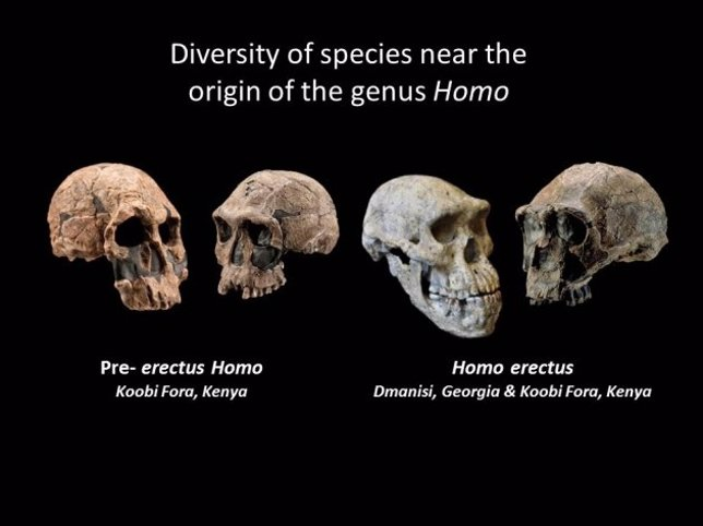 Evolución del género homo