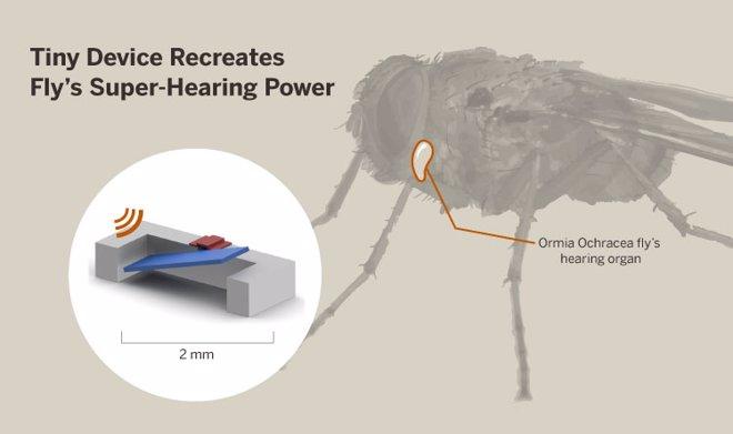 dispositivo audítivo basado en la mosca