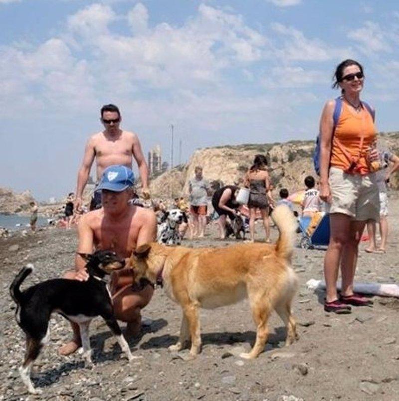 La protectora llevar el 1 de agosto a unos 70 perros para for Protectora de animales malaga ciudad jardin