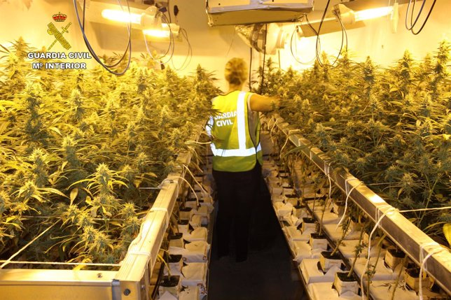 La guardia civil desmantela una plantaci n de marihuana en for Marihuana interior produccion