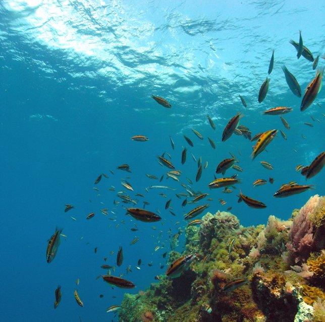peces fotografiados durante una inmersión