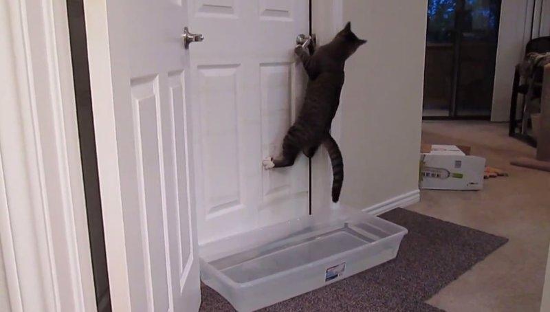 Los Gatos Son Expertos En Abrir Puertas
