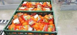 Foto: Mercadona compra 90.000 toneladas de naranjas y mandarinas españolas en la campaña 2014, un 12% más (EUROPA PRESS)