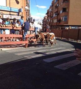 Foto: Tres heridos leves en el segundo encierro de San Sebastián de los Reyes (Madrid) (EUROPA PRESS)
