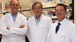 Foto: José Ángel Martínez-Climent recibe la 'Beca Roche en Onco-Hematología 2013' (EP/CIMA)