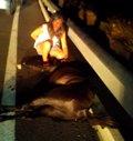 Foto: Un caballo suelto en la carretera provoca un accidente de tráfico (EUROPA PRESS/CYD SANTA MARÍA)