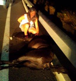 Caballo suelto provoca accidente de tráfico Málaga CYD Santa María