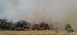 Foto: Unas 80 personas trabajan en un fuego nivel 1 declarado en Mecerreyes (Burgos) (EUROPA PRESS)