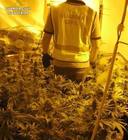 Foto: Desmantelado un laboratorio de cultivo de marihuana en Bétera (Valencia) con dos detenidos (GC)