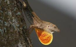 Foto: ¿Cóm funciona la selección natural en un mundo más caliente? (BIOPICS)