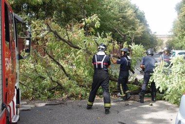 Foto: Cae un árbol en la calle Palos de la Frontera sin causar daños (EUROPA PRESS/EDUARDO BRIONES)