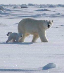 """Foto: Las ONGs esperan propuestas """"valientes"""" de los líderes mundiales en la cumbre de cambio climático del martes en la ONU (WWF)"""
